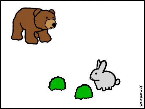 1-Bunny-2