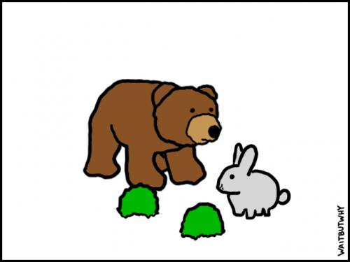 1-Bunny-3