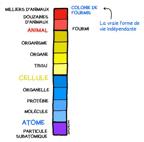 Diapositive7V2 (1)